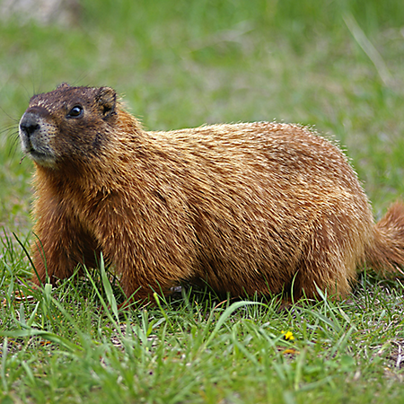 Well, it's #Groundhogs Day… OrNot!